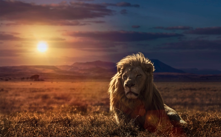 majestic-lion-king-wallpaper.jpg